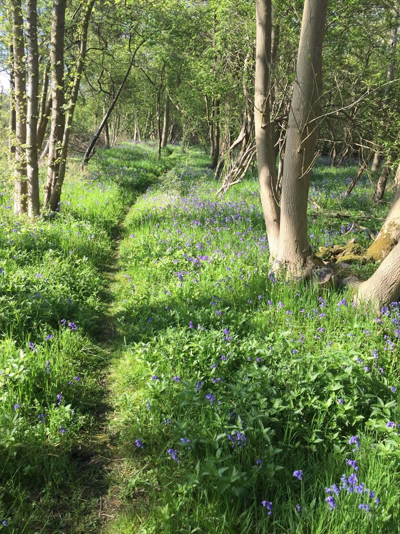 animal track through woodland